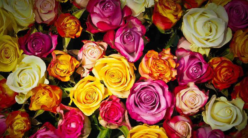 Ý nghĩa hoa Cover-1-3-800x445
