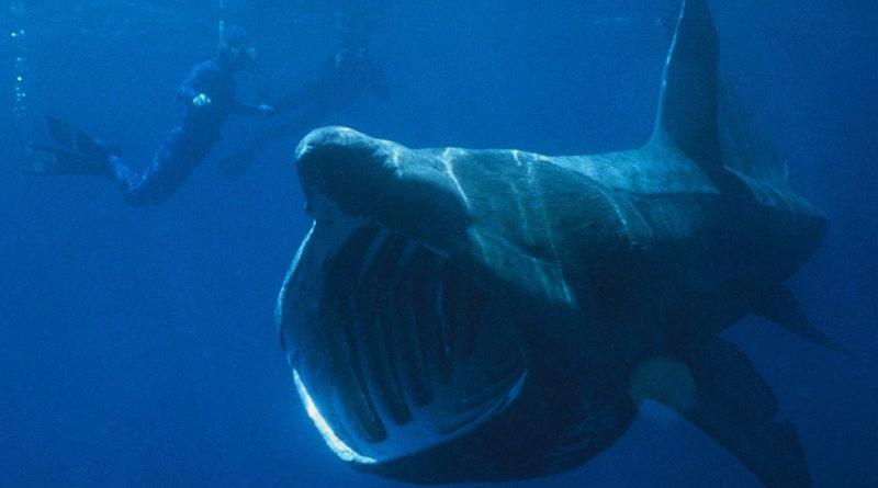โลกนี้เหลือกี่ตัว? 10 ฉลามสายพันธุ์สุดแปลก ที่คุณอาจไม่คิดว่ามีอยู่จริง