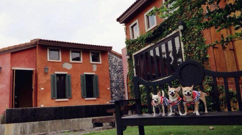 10 ที่พัก สุนัขพักได้ พาน้องหมาออนทัวร์เที่ยววันหยุด