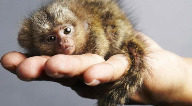 น่ารักดุ๊กดิ๊ก!! 10 สัตว์ไซซ์ Mini ตัวเล็กจิ๋วที่สุดในโลกที่คุณต้องหลงรัก