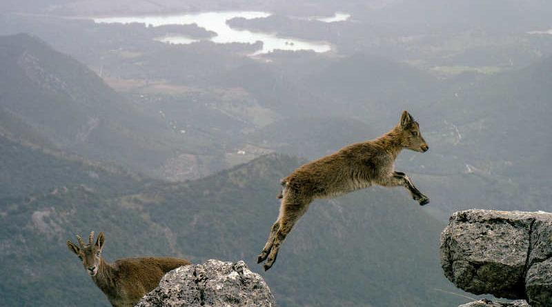 10 สัตว์โลกกระโดดสูง