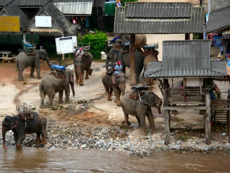 ขี่ช้างเที่ยว บ้านกะเหรี่ยงรวมมิตร เชียงราย