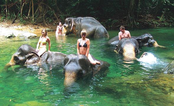 ขี่ช้าง ปางช้าง เกาะช้าง