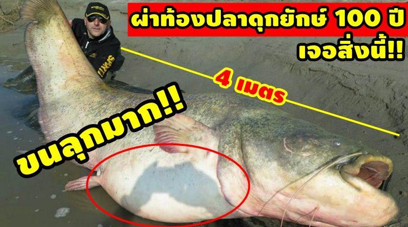 ผ่าท้องปลาดุกยักษ์ 100 ปี ขนลุก