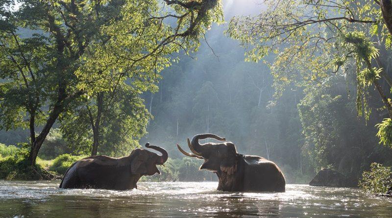 10 ที่เที่ยวขี่ช้าง