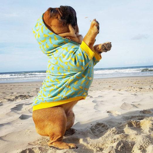nico_curtinho ชายหาด