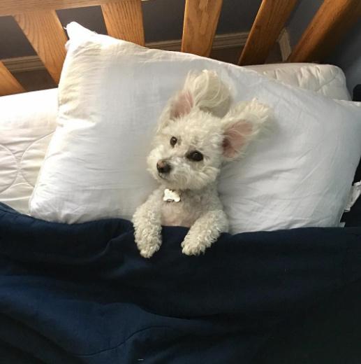 quincyvines-นอนบนเตียงคิ้วๆ