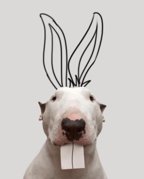 rafaelmantesso-หมากระต่าย