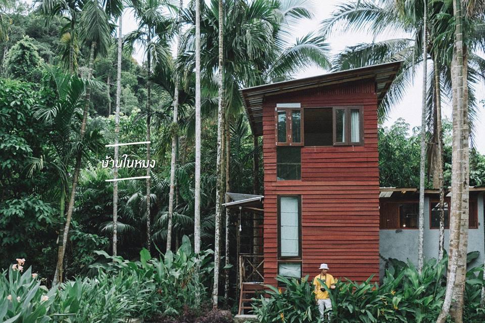 บ้านในหมง Treehouse จ.ระนอง1