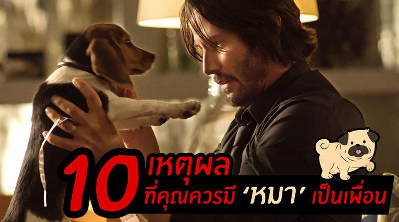 10 เหตุผลดีต่อใจ ถ้ามีหมาเป็นเพื่อน