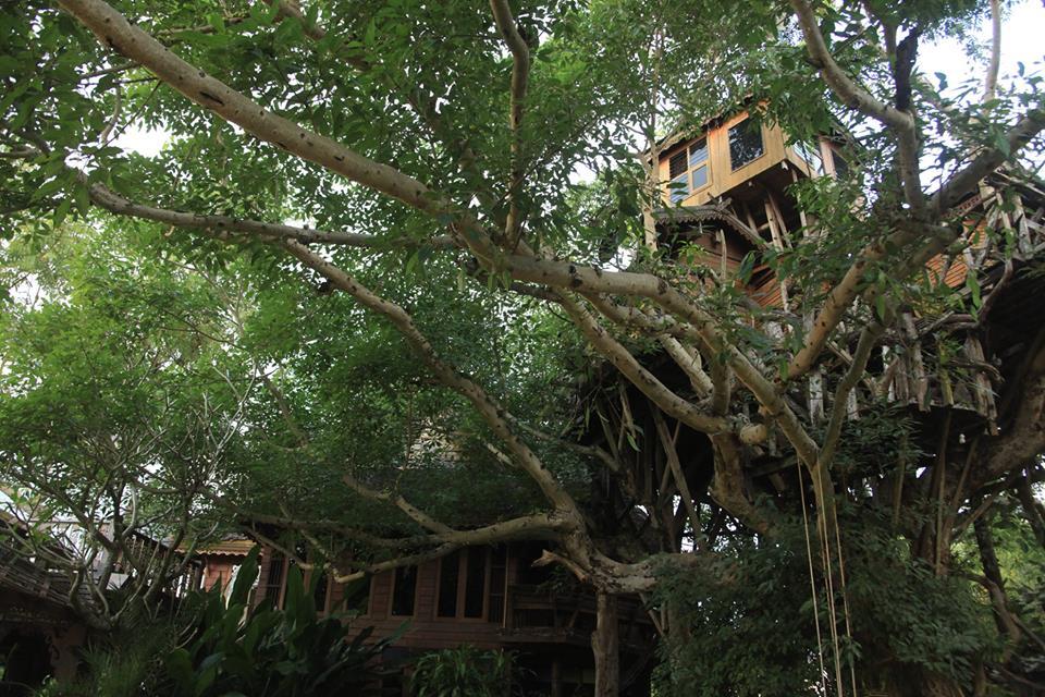 Pai Treehouse Resort อำเภอปาย จังหวัดแม่ฮ่องสอน3
