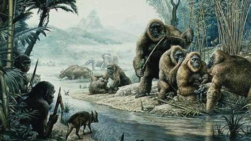 เจ้าแห่งวานร Gigantopithecus