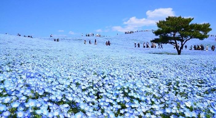 10 อันดับสวนดอกไม้สวยที่สุดในโลก