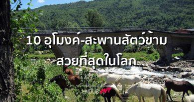 อุโมงค์สัตว์ข้ามไม่ได้มีที่ไทยที่เดียว!! 10 อันดับอุโมงค์สะพานสัตว์ข้าม สวยที่สุดในโลก