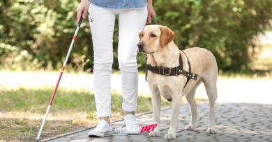 มนุษย์จงรู้ไว้! 5 ข้อควรทำ เมื่อพบสุนัขนำทางผู้พิการ รู้ไว้สักนิด ช่วยพวกเขาได้เยอะ