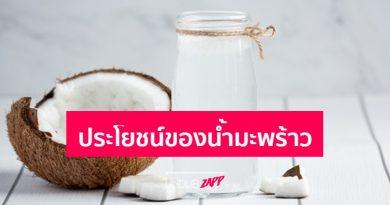 ดื่มน้ำมะพร้าวทุกวันได้ไหม? 5 ประโยชน์ของน้ำมะพร้าว พร้อมโรคที่ห้ามกินน้ำมะพร้าว